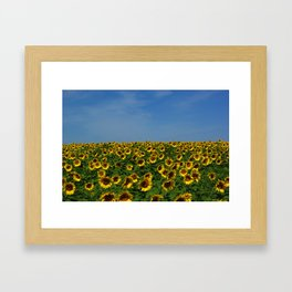 Sunflowers meet the sky 8819 Framed Art Print