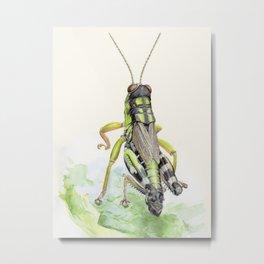 locust Metal Print