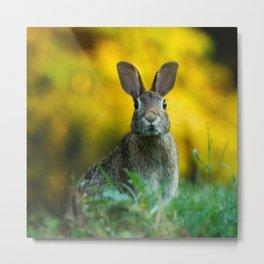 Rabbit | Lapin Metal Print