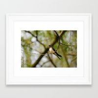 swallow Framed Art Prints featuring Swallow by Ria Pi