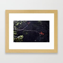 Red Berrys Framed Art Print