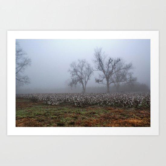 Foggy Cotton Field Art Print