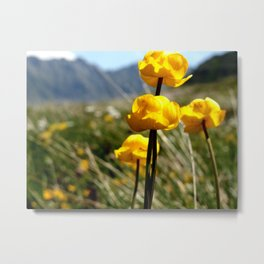 Alpine Flowers II Metal Print