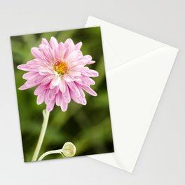 Padre Cerise Belgian Mum Bud and Bloom Stationery Cards