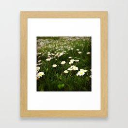 Flowers in a field Framed Art Print