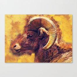 Bighorn sheep #sheep #animals Canvas Print