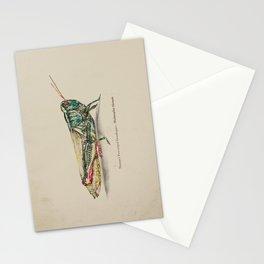 Thomas's two-striped Grasshopper - Melanoplus Tomasi Stationery Cards
