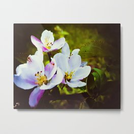 Apple Blossom Days Metal Print