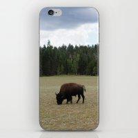 buffalo iPhone & iPod Skins featuring Buffalo  by Taylor Palmer