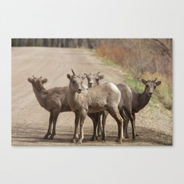 Which Way! Canvas Print