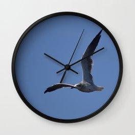 Great Black Backed Gull Immature  Wall Clock