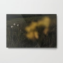 Buttercup Flower in a filed. Metal Print