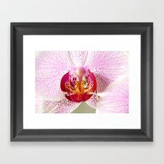 Pink points orchid 35 Framed Art Print