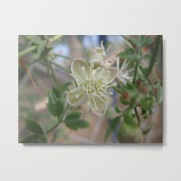 Flowering Vine on a Fence Metal Print