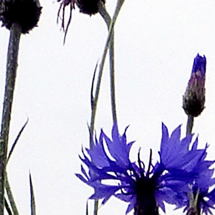 Cornflowers blue Leggings