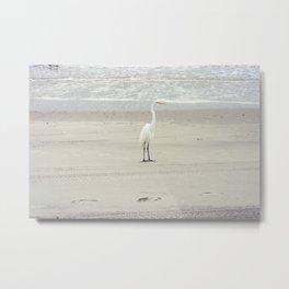 White Heron on Myrtle Beach Shore Metal Print
