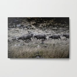 Sheeps in the mountain Metal Print