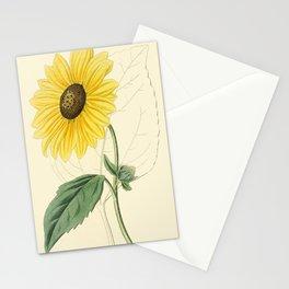 Edwards, S.(1768-1819) - Edwards' Botanical Register - Heianthus Stationery Cards