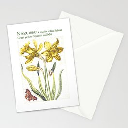 Narcissus botanical illustration Stationery Cards