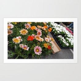 Farmer's Market Flower Flats Art Print