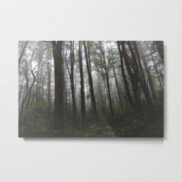 Forest Trail XXXV Metal Print