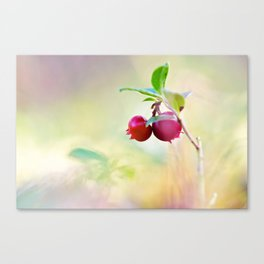 Macro shot of cowberry in forest Canvas Print