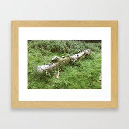 Chopped Tree Framed Art Print
