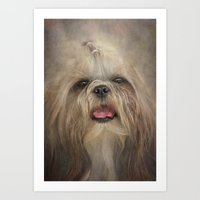 shih tzu Art Prints featuring Shih Tzu by Pauline Fowler ( Polly470 )