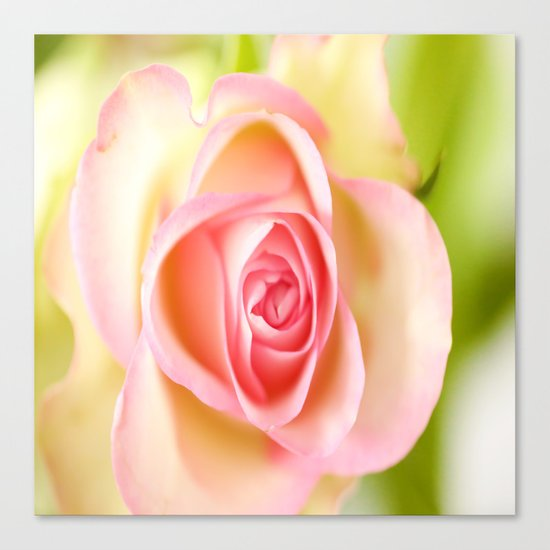 Lovely delicate pink rose Canvas Print