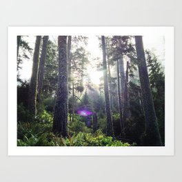 Canopy Light, Cape Meares State Park, OR Art Print