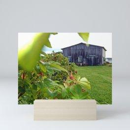 Wild Rose Bush and the Old Barn Mini Art Print