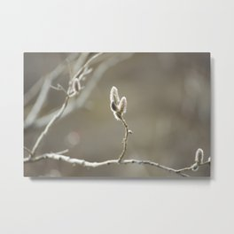 Willow Dreams Metal Print