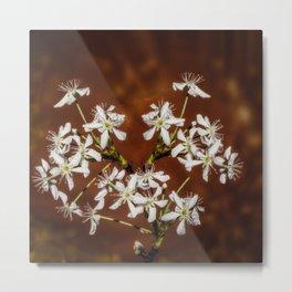 Cherry bloom Metal Print
