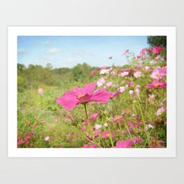 Cosmos in the field Art Print