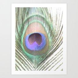PEACOCK FEATHER III Art Print