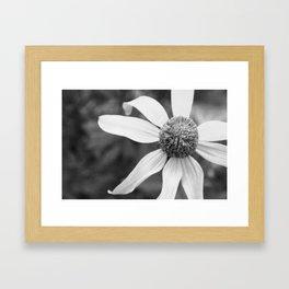 Wildflower Top BW Framed Art Print
