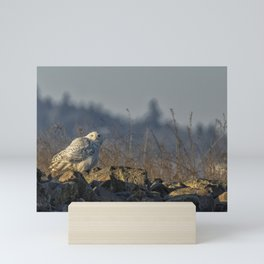 The Watchful Eye of a Snowy Beauty - cropped Mini Art Print