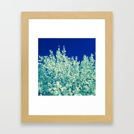 White Flowering Tree Framed Art Print