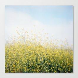 Yellow Mustard, Blue Sky Canvas Print