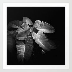 Elephant Ears in the Dark Art Print