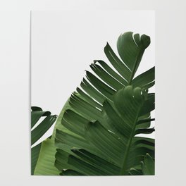 Minimal Banana Leaves Poster