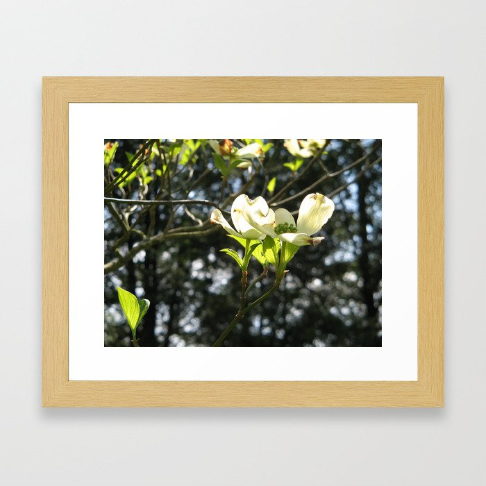 White Dogwood Framed Art Print
