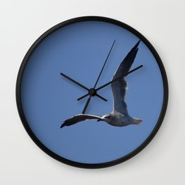 Great Black Backed Gull Immature  Wall Clock