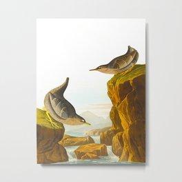 Columbian Water Ouzel James Audubon Scientific Illustration Metal Print