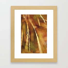 Summer Wheat Framed Art Print