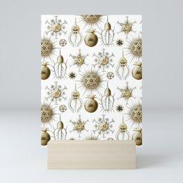 Ernst Haeckel - Phaeodaria Mini Art Print