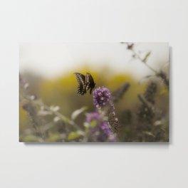 Black Swallowtail Butterfly V Metal Print
