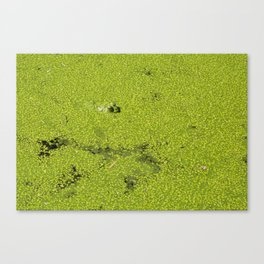 The frog game Canvas Print