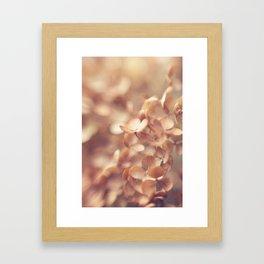 Soft Peach Framed Art Print