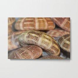 Alonso Sea Urchin II Metal Print